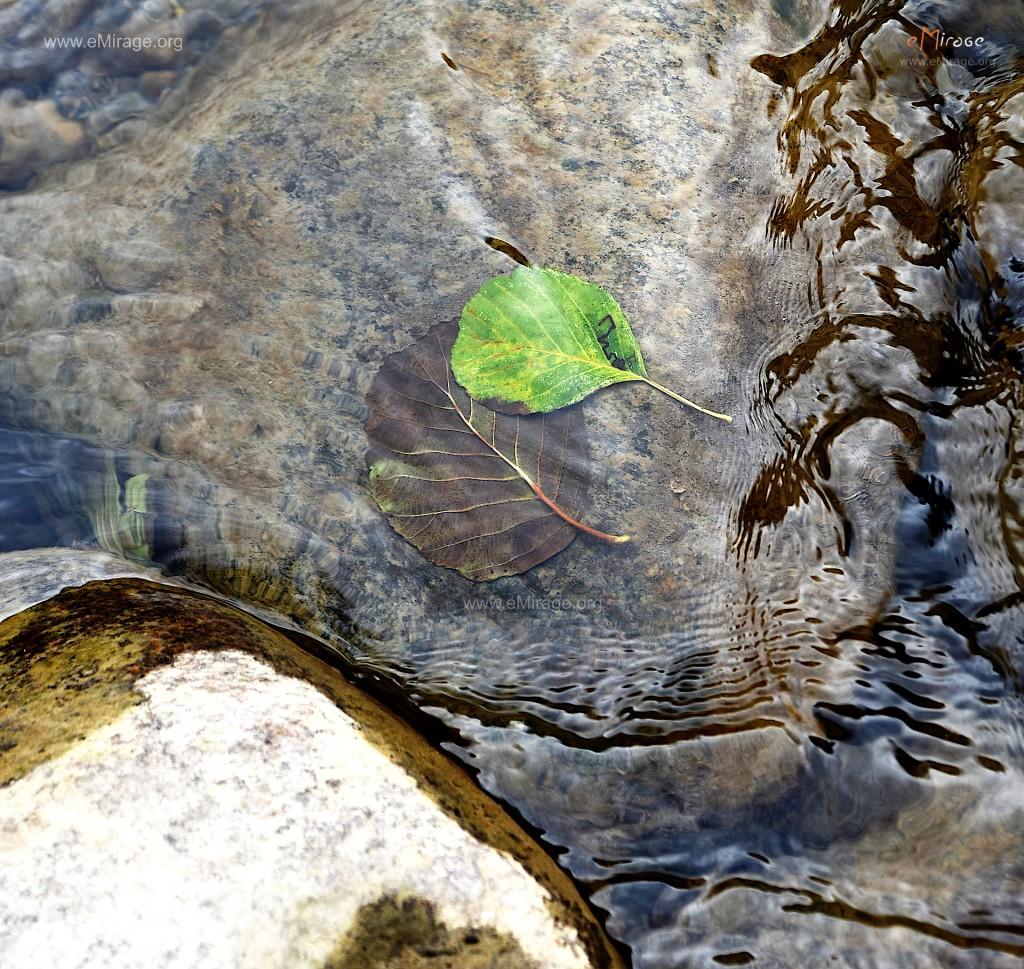 DSC_9976+leafs