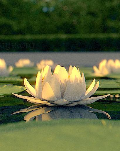 Free Download White Lotus Emirage