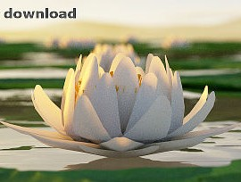 featured_imager_free_stuff_lotus_flower