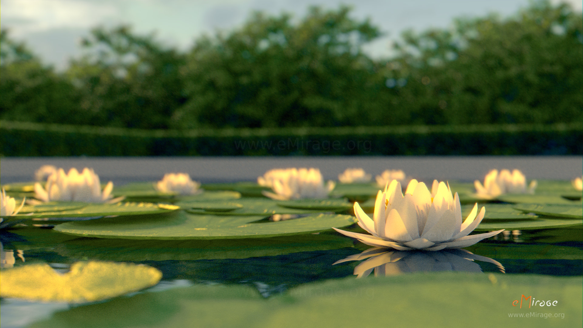 A Lotus Flower! | Known is a drop, Unknown is an Ocean